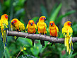 Parrot Jungle and Gardens Foto